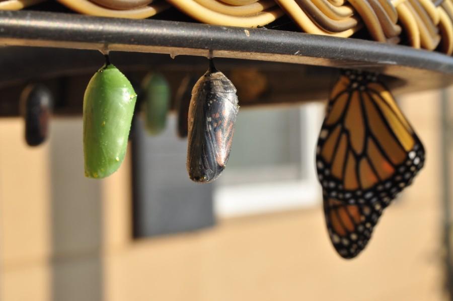 AV Cambiamento come una farfalla